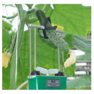 植物生长变化测量仪  LY-SZZ