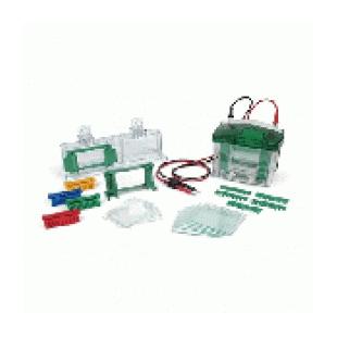 BIO-RAD伯樂mini4小型垂直電泳槽1658001
