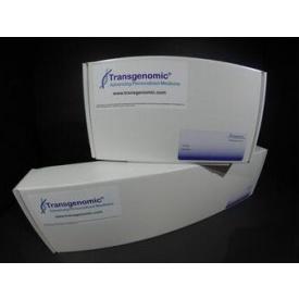 Amino Sep Na+ AA-911 氨基酸分析柱