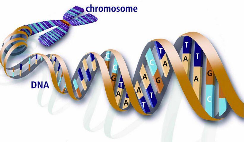 研究人员发现抗癌基因新成员 可抑制肿瘤细胞生长