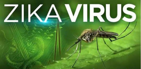 正处于开发阶段的一种减活寨卡疫苗可完全防止寨卡病毒感染