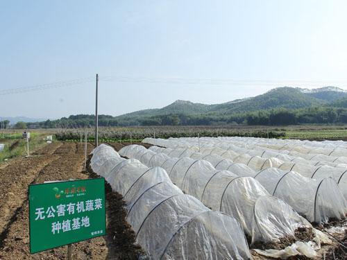 东莞监测全市蔬菜生产基地 检测项目居全省前列