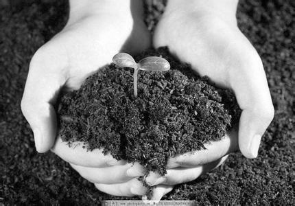 """怎么整治已经""""生病""""的土壤?""""三大药方""""终于开出!"""