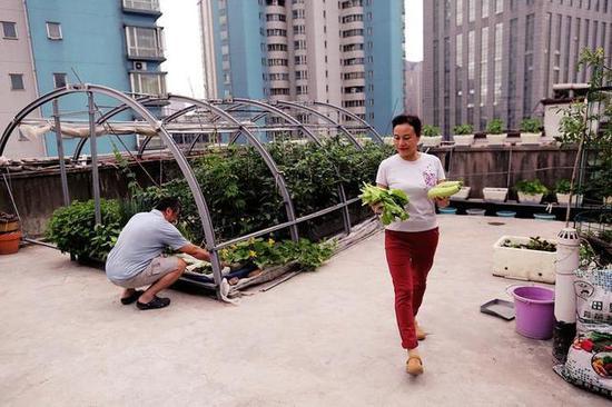 """西安夫妇花十年在居民楼顶造出""""空中菜园"""""""