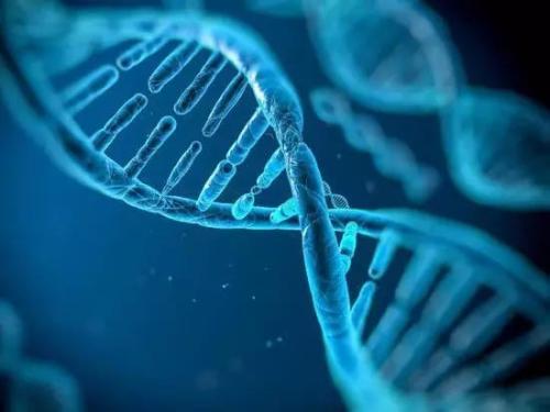 """""""基因魔剪""""有了脱靶突变检测系统"""