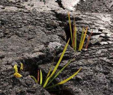 土壤污染防治法将施行,违法最高罚200万!
