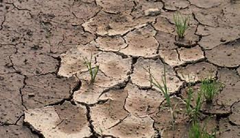 土壤环境安全是根本 四川巴中实施七大行动打响三大战役