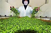 市監總管抽查網售茶葉不合格 檢測儀器讓有害物質無所遁形