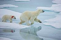 北冰洋布放沉积物捕获器 观测生物季节变化