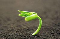 《植物生长调节剂的高通量筛选 液相色谱-质谱联用法》
