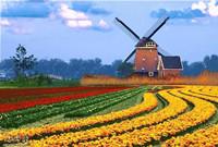"""丹麥研發3.6MW風力全尺寸""""超導發電機"""" 首次試驗成功"""