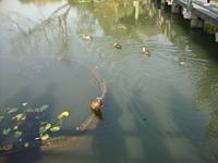 水污染源在线监测系统(CODCr、NH3-N 等)运行技术规范