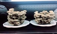 河南省发布《预包装冷藏膳食食品生产许可审查方案》涉及多项仪器设备