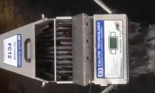 FC12鱼苗计数器在水产养殖上使用示例