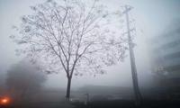 上海市生态局印发2020-2021年秋冬季大气污染综合治理攻坚行动