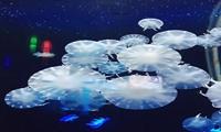 技术线上论坛|1月21日《从单个蛋白到单细胞层级解析生物体系的单分子力学》