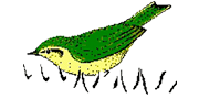 德国Avisoft Bioacoustic