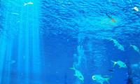"""""""海豚""""移动式海洋地震仪将开展为期3个月地震P波观测"""