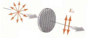 光的偏振现象
