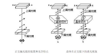 正交偏光显微镜简介_偏光显微镜结构_工作原理-中国