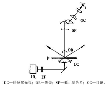 透射式倒置荧光显微镜的原理