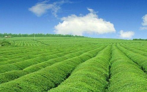 农业质量.jpg