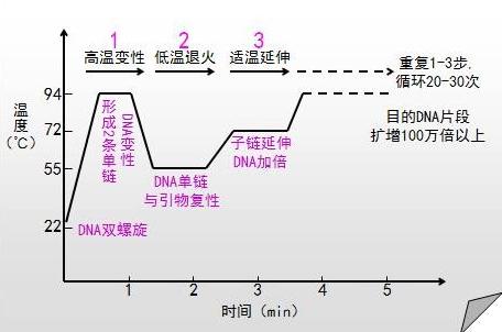 pcr技术原理和操作步骤