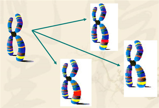 染色体变异.jpg