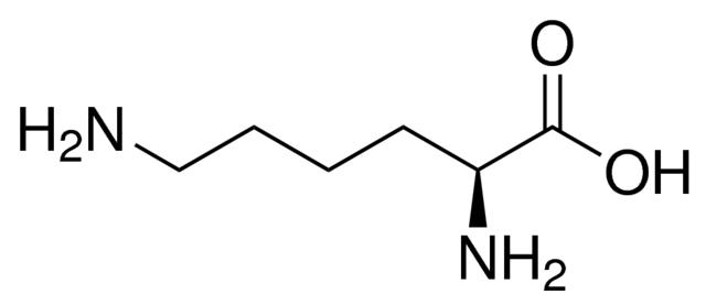 1.L -赖氨酸.png