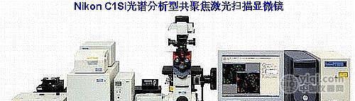 实时光谱型激光扫描共聚焦系统