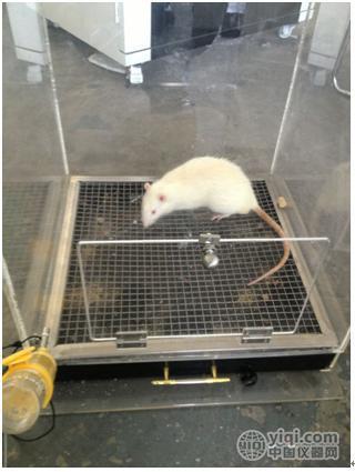 大小鼠通用饮水电击实验视频分析系统