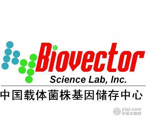 pGL3basic pGL3control promotor enhancer
