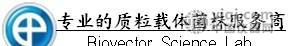 Cre/Lox系统载体pIS56 NETO2 3UTR mut
